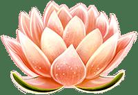 Dragons Luck lotus flower symbol